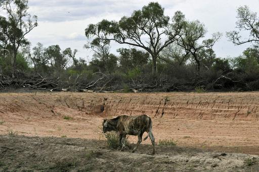 ボリビアで深刻な干ばつ
