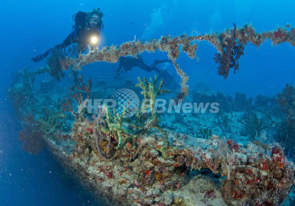 軍艦が10年で魚たちの楽園に、米フロリダ沖