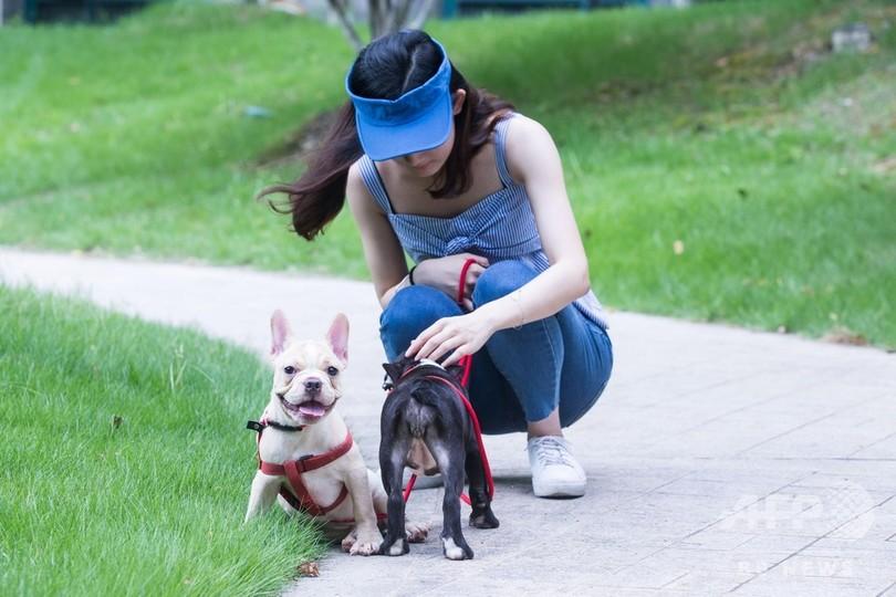 「史上最も過酷な飼い犬条例」午前7時〜午後10時は散歩禁止 雲南