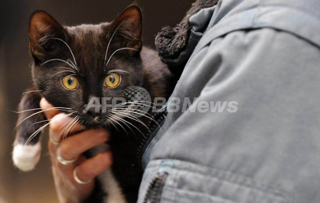 「ベルリン最速のネコ」を救出、ドイツ