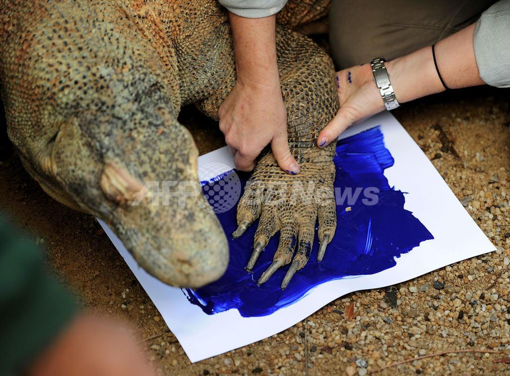 人間の手にそっくり?コモドオオトカゲが「手形」に挑戦