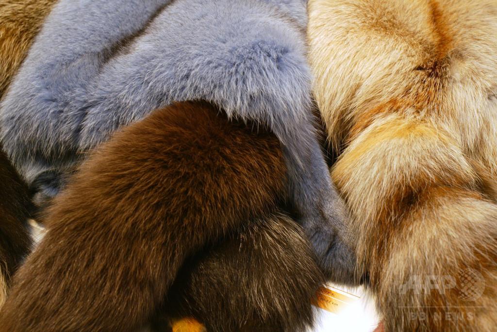 チェコ、2019年から毛皮農場を禁止