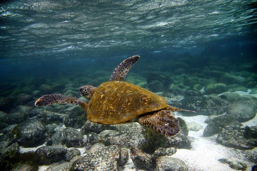 ガラパゴス諸島で有害物質積んだ船座礁、環境緊急事態を宣言