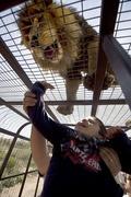頭上のライオンに大興奮! チリのサファリパーク