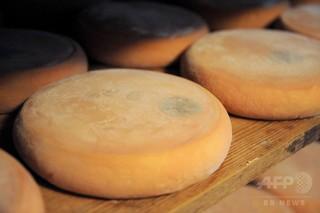 生乳チーズで大腸菌感染、幼児6人が入院 フランス