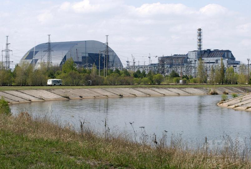 事故から約30年、チェルノブイリで野生動物が増加