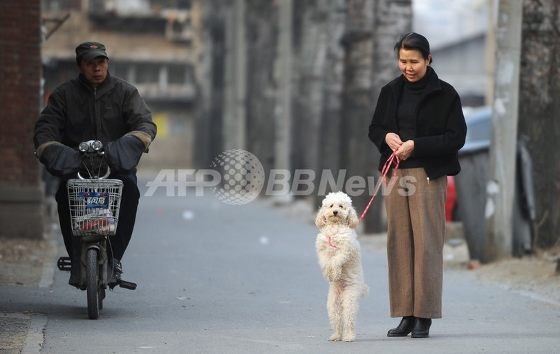 「立つ犬」、ただいまお散歩中 北京
