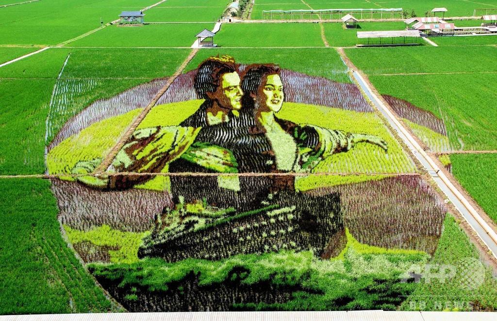 水田がキャンバスに、種類異なる稲使い描く巨大アート 中国・瀋陽