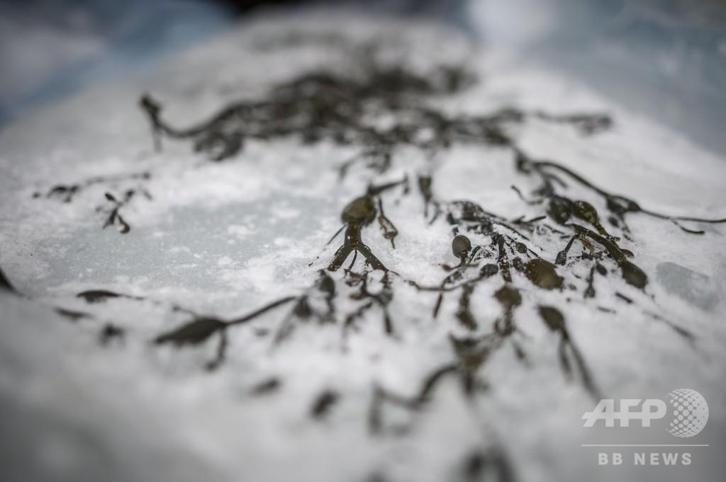 【記者コラム】北極圏のクレージーサーファーたち