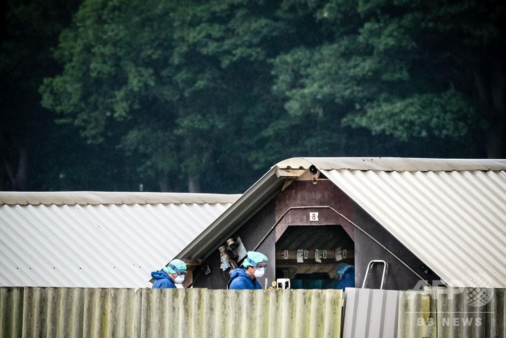 オランダ、2021年までに全ミンク農場閉鎖へ コロナ感染の懸念受け