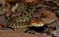 「くしゃみザル」や「歩く」魚など、新種生物211種をヒマラヤで発見
