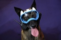 遠隔監視できる犬用カメラ付きゴーグル 仏のセキュリティー見本市で登場