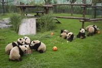 【写真特集】かわいいパンダ