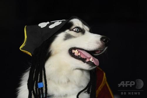 宇宙飛行士から海賊まで、犬の仮装コンテスト エルサルバドル