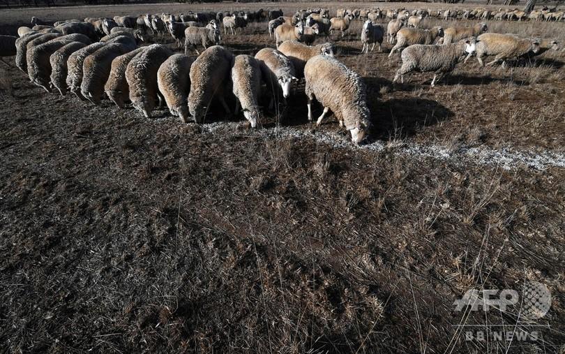 豪東部に50年で最悪の大干ばつ、絶望する農家 シャワーは3分以内