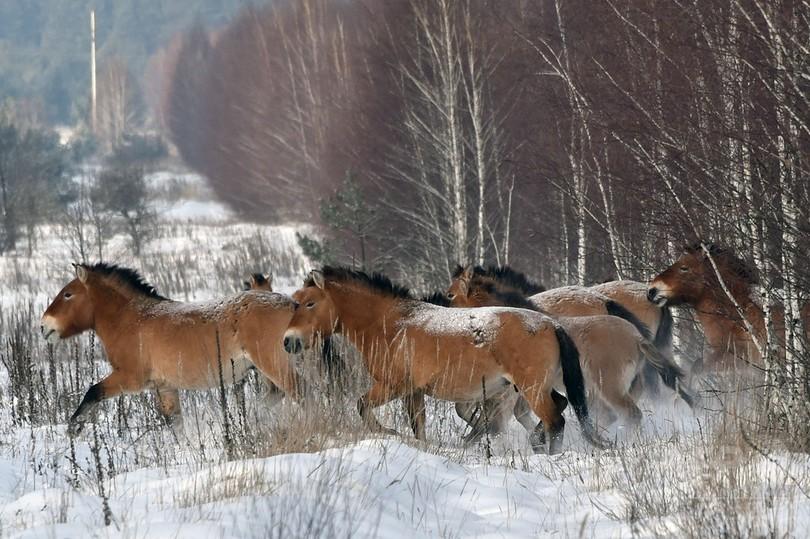 野生馬、地球上からすでに絶滅していた DNA分析で判明