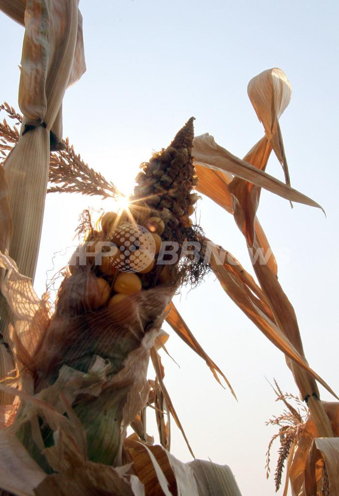 バルカン諸国で前例のない大干ばつ、被害額10億ユーロ以上