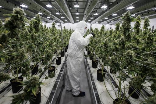 カナダでマリフアナ合法化へ 嗜好用・医療用大麻をめぐる各国の状況