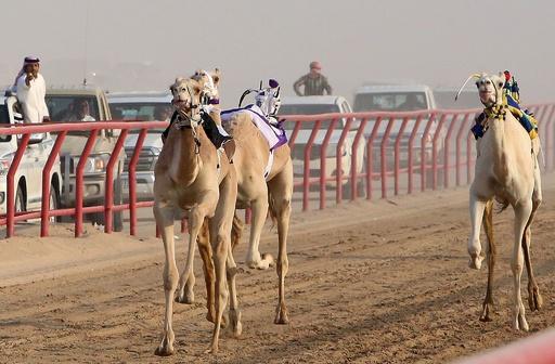 背中には「ロボット騎手」 クウェートでラクダレース開催