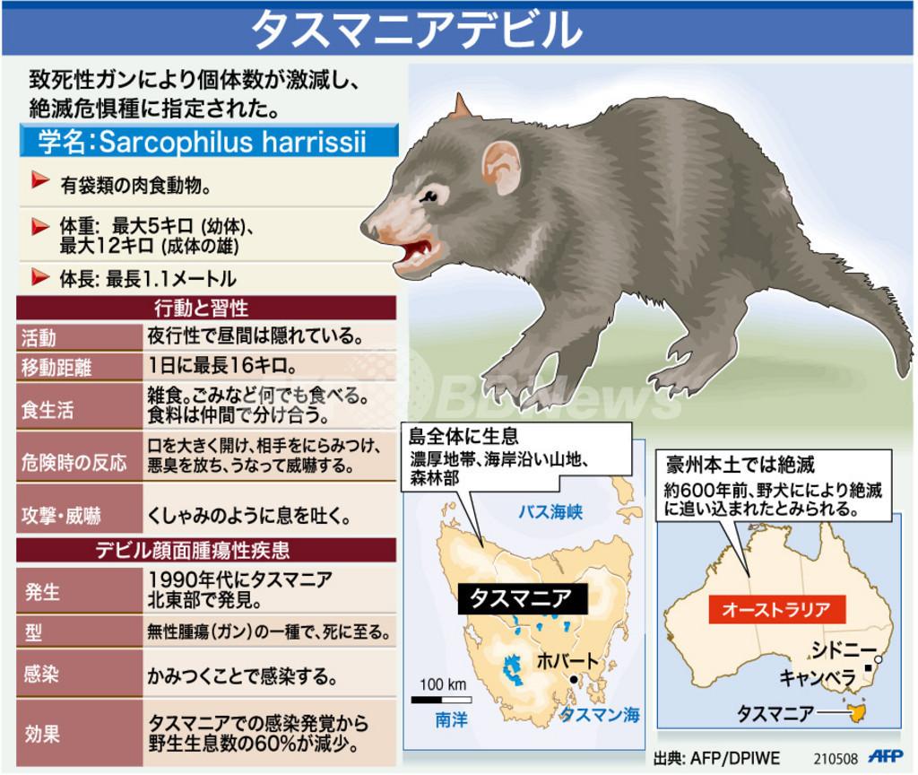 【図解】絶滅危惧種、タスマニアデビル