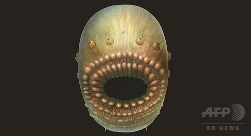 人類最古の祖先、5億4000万年前の肛門のない袋状生物か 研究