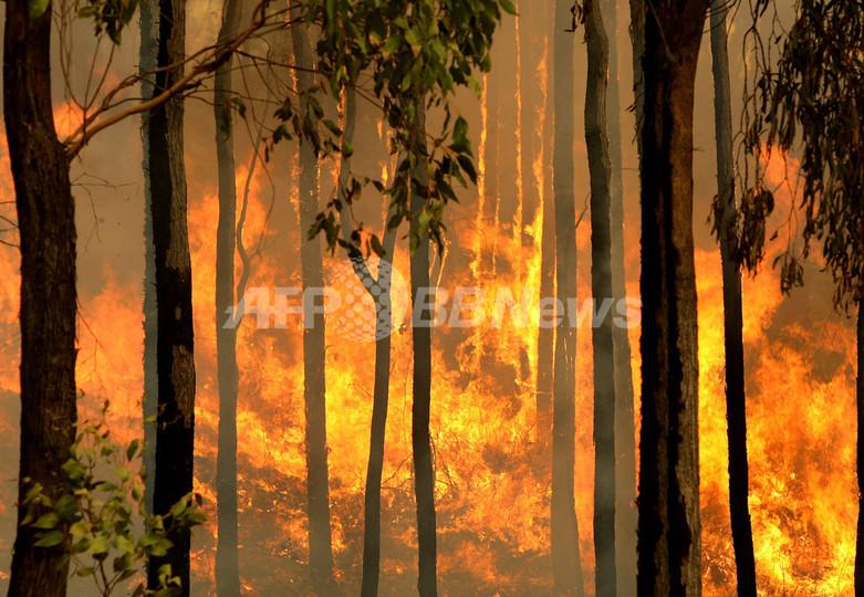 オーストラリアの山火事、死者数は181人に 今後も増加の懸念高まる