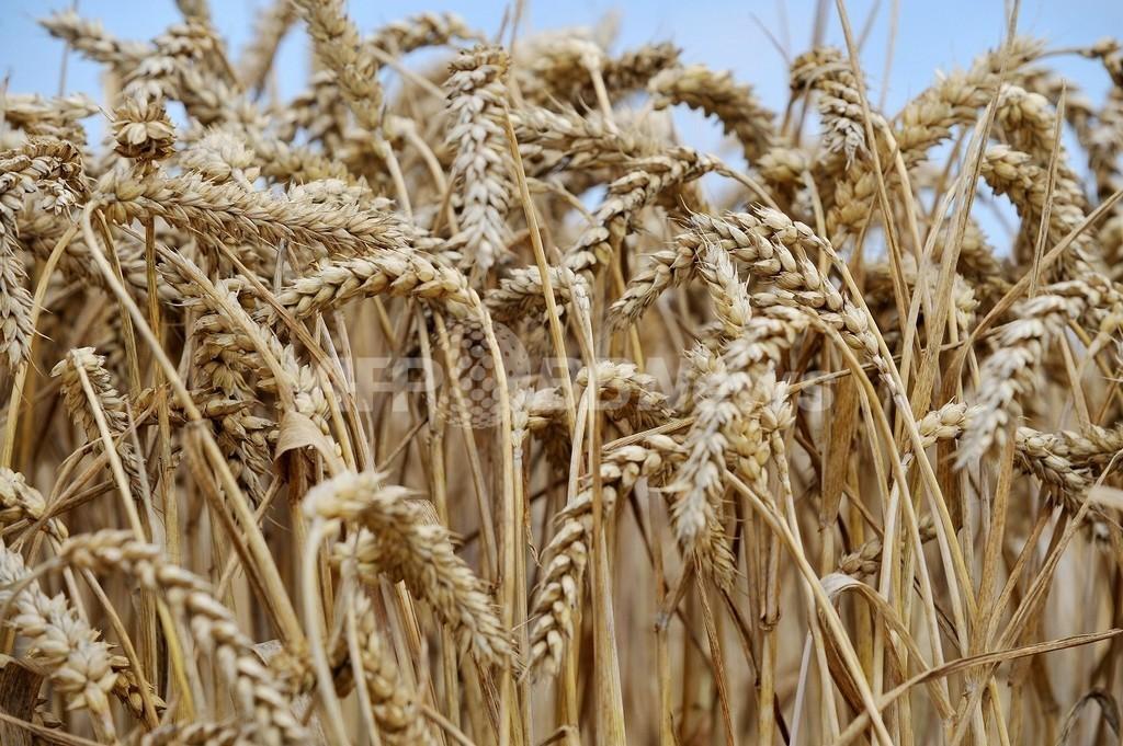 小麦のふすまは便秘に効き目なし、研究報告