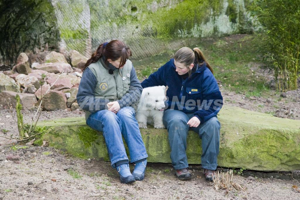 お外は楽しいな、ホッキョクグマのフロッケが動物園内を探検
