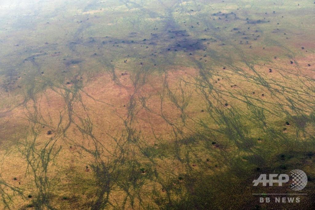 生物多様性のホットスポット、南スーダン