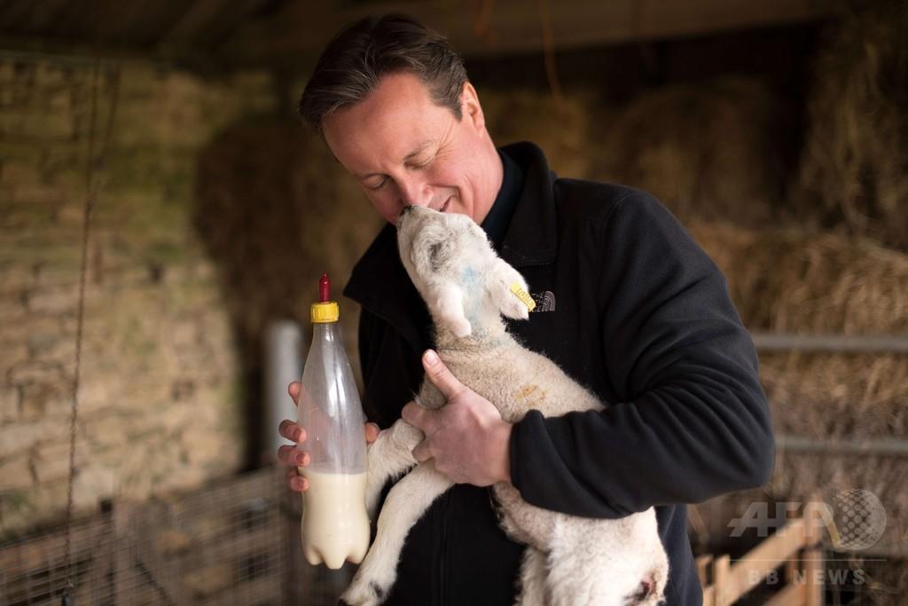子羊にミルクをあたえるキャメロン英首相、満面の笑み