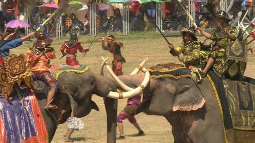 動画:ゾウ100頭が古代の戦い再現、タイ伝統のエレファントショー