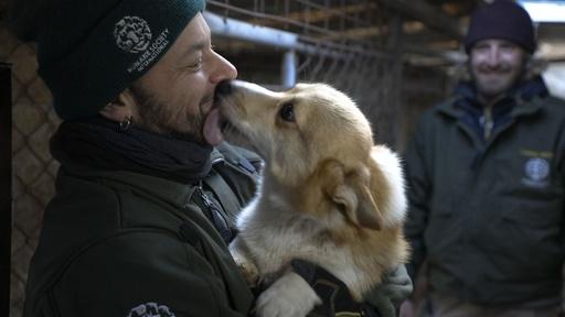 動画:犬200匹の救出作戦開始、閉鎖された食用犬の飼育場で 韓国