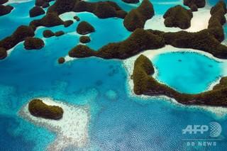 パラオ、「サンゴ礁に有害」な日焼け止め禁止へ 2020年から