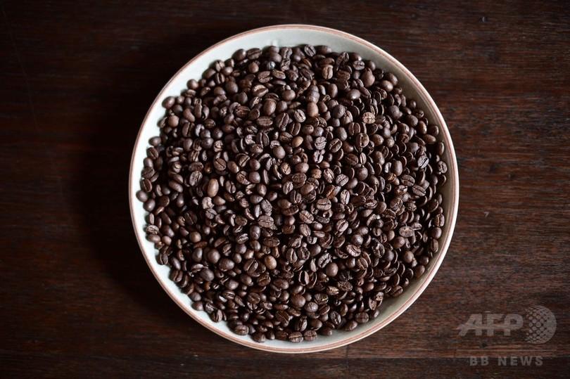 ゾウのふんから集めた超高級コーヒー、そのお味は?タイ