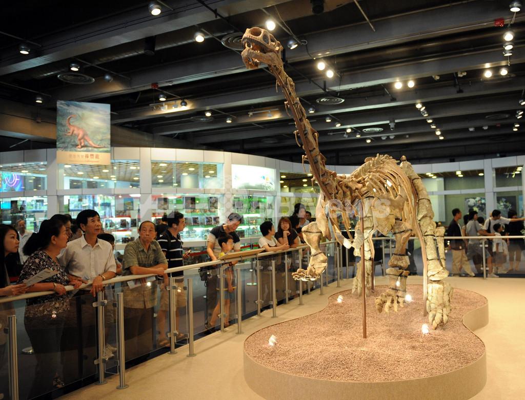 恐竜の胚の化石を発見、卵の中での成育解明に光