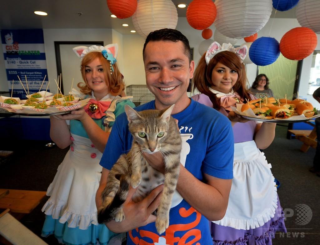 米ロサンゼルスに「猫カフェ」、期間限定オープン