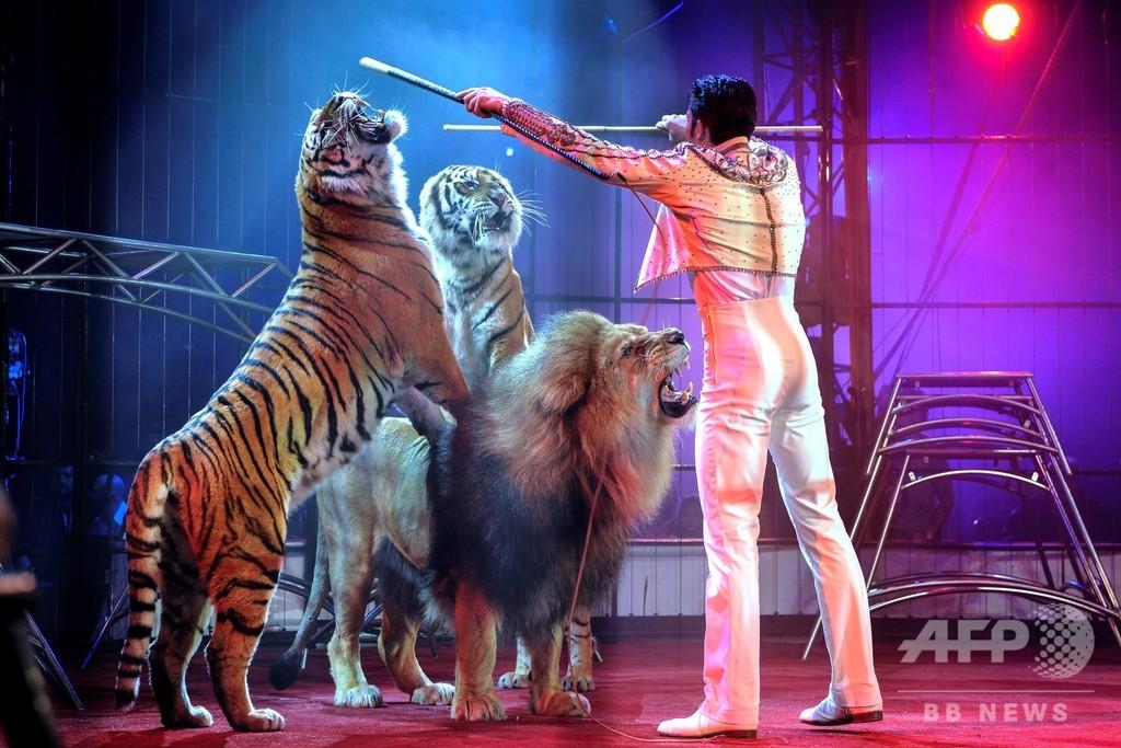 ミンク農場やサーカスでの動物使用、段階的に禁止へ フランス