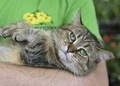 米NY、ネコの爪の除去術禁止法を施行 州では米国初
