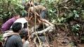 ウナギ捕りに出掛けた村人ら、8メートルのヘビ捕獲 インドネシア