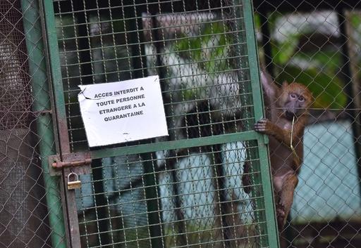 エボラ熱への不安で捨てられるペットたち、コートジボワール