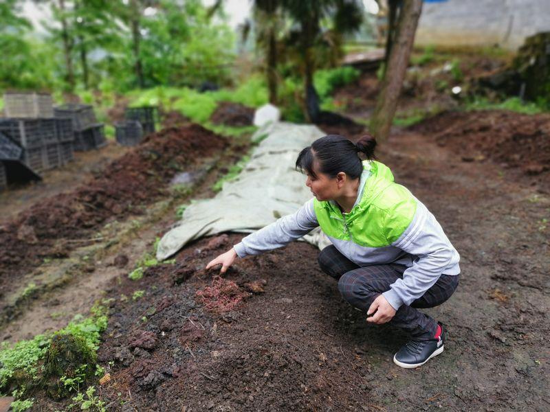 貴州省の山奥で「牛とミミズ」活用した循環型農業 地元の雇用も創出