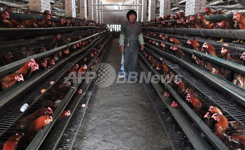 江蘇省で4人が鳥インフル感染、中国の感染者7人に