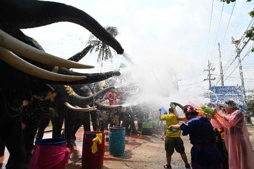新年祝う祭り「ソンクラーン」控えたタイ、ゾウと水掛け合戦