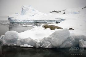 北極と南極の今年1月の海氷域は過去最小 報告書