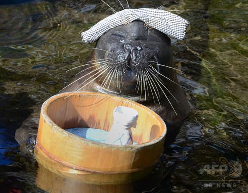癒やしのアザラシ温泉芸「いい湯だな」 箱根