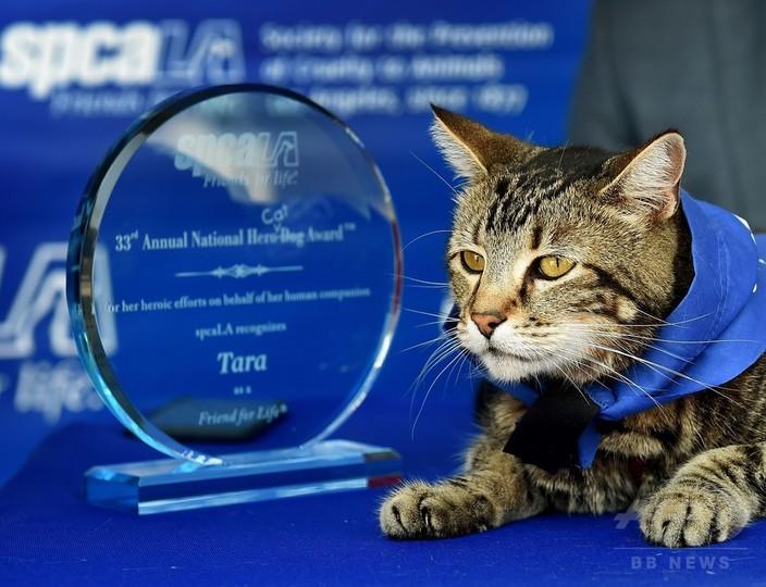 米動物愛護団体、子どもを犬から救った猫に「ヒーロー犬賞」
