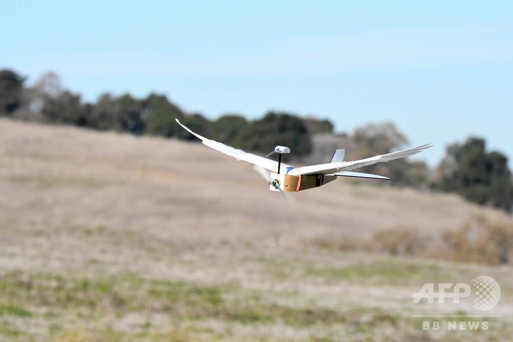 鳥のように飛べる飛行機、「ピジョンボット」で実現に一歩前進