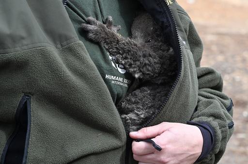 【今日の1枚】「助かった!」胸にしがみつくコアラの赤ちゃん