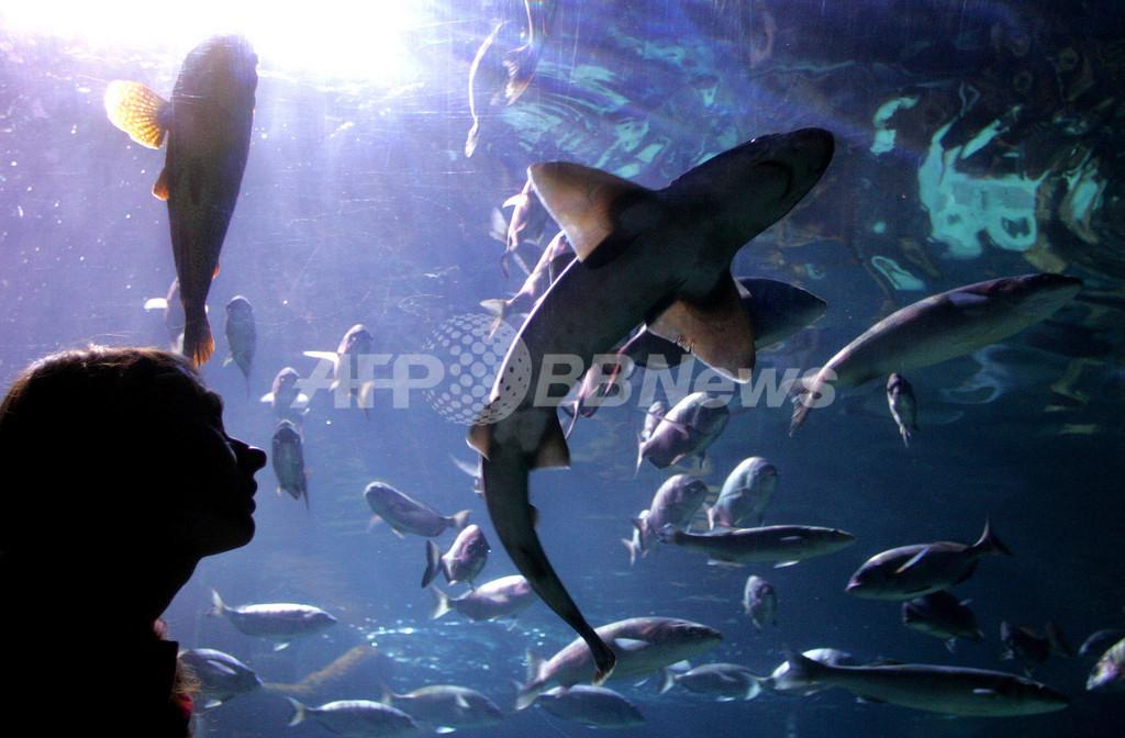 香港の公園の池で巨大「ワニ魚」出没相次ぐ、住民ら不安の声