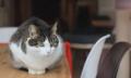 飼い猫が急に凶暴化、原因は珍しいウイルス 伊当局が注意喚起